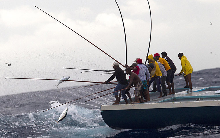 sustainable tuna fishing in the maldives in pictures