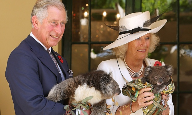 It won't bite. Britain's Prince Charles and his wife, Camilla, the Duchess of Cornwall, hold koalas at Government House in Adelaide, Australia. The Royal couple are in Australia on the second leg of a Diamond Jubilee Tour taking in Papua New Guinea, Australia and New Zealand.