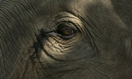 A Thai elephant's eye is caught by the sunlight at an elephant camp at the Anantara Golden Triangle resort, Thailand.