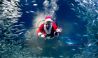 A diver dressed as Father Christmas