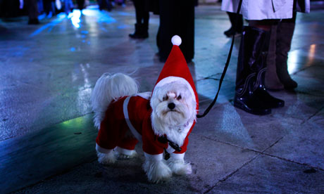 A dog gets in the Christmas spirit in Athens