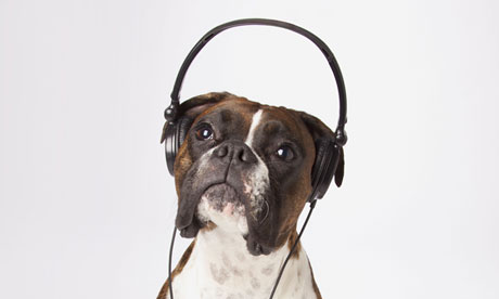 dog in headphones