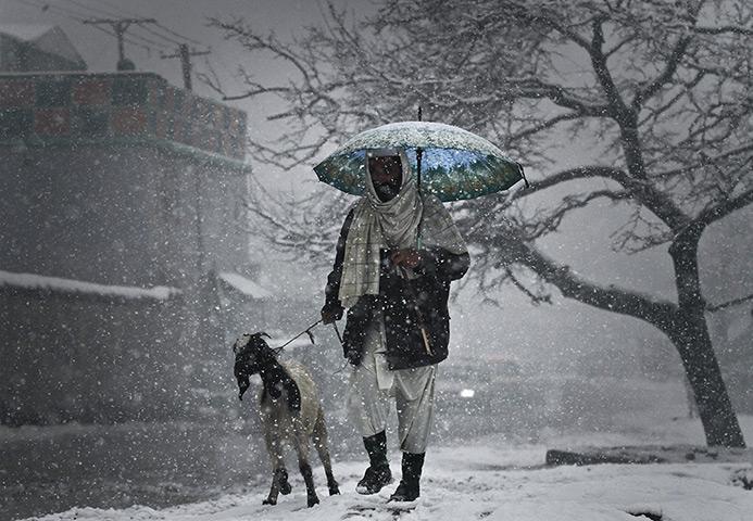 24小时的图片:一名阿富汗男子与他的山羊走在喀布尔