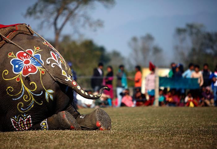 24小时的图片:一头大象装饰品上被视为在大象选美比赛