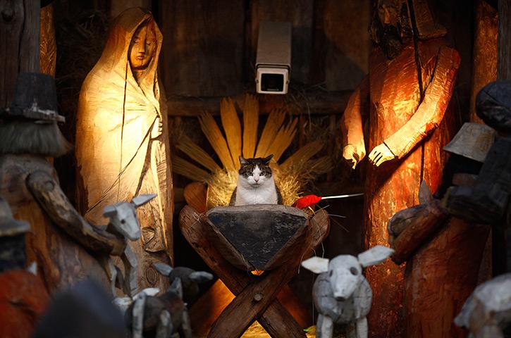 24小时的图片:一只猫坐在教堂外的耶稣诞生场景