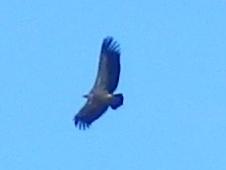 eagle Extremadura