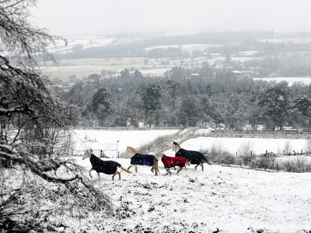 Horses are dressed for the weather near Banchory, Aberdeenshire