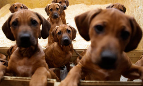 UK couple to be sentenced after making thousands selling sick puppies…