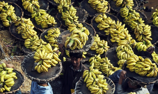 A more palatable, Pakistani labourers carry baskets of bananas at a fruit market in Lahore.