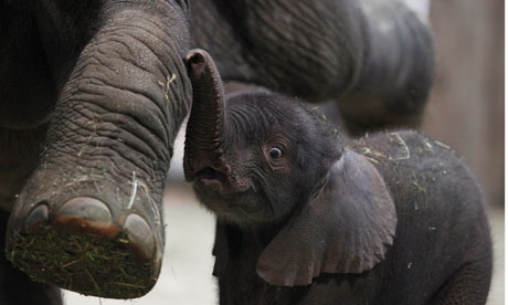 A-baby-elephant-and-its-m-007.jpg