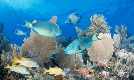 fish reef. Xi Jinping and Barack Obama should now plan a snorkelling trip to ...