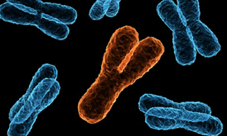 Male pride restored as Y chromosome wins a reprieve ... X And Y Chromosomes