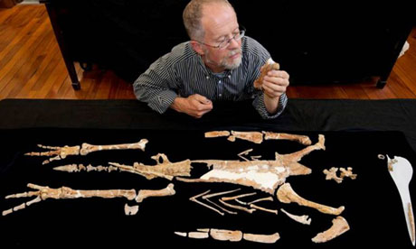 Ewan Fordyce, a professor of geology, examines a composite skeleton of giant penguin Kairuku