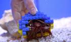 Lego brick crab shell