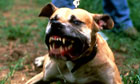 Dangerous dog laws to be widened to cover attacks on private land