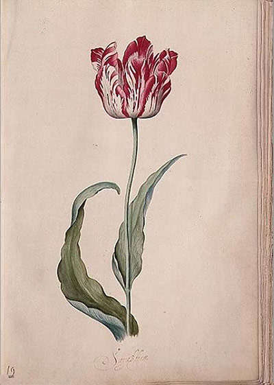 10 Best: Tulip from her Tulip book by Judith Leyster<