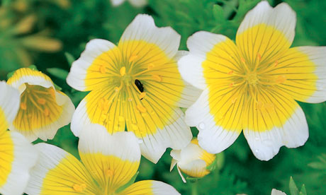 Alys Fowler: poached egg plant