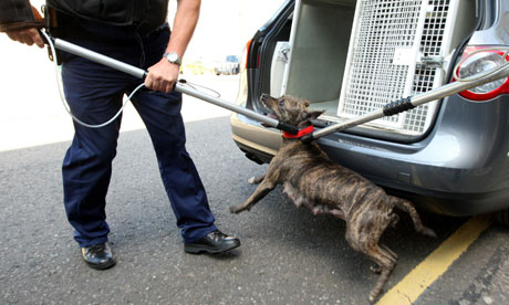 Police dog handlers remove a pitbull during a raid. Photograph