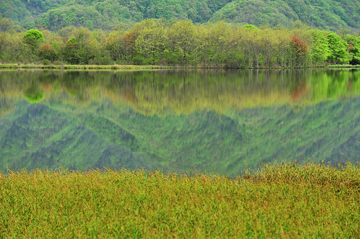 Week in Wildlife: China-hubei-shennongjia-dajiuhu Mountain Wetland-scenery