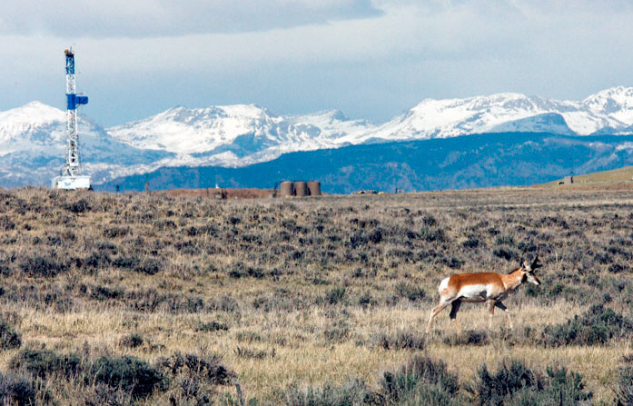 Week in Wildlife: As Natural Gas Fileds Grow, Pronghorn habitat shrink