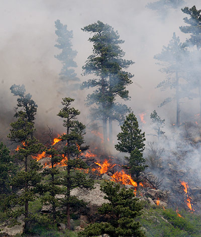 week in wildlife: Hewlett Wildfire