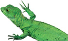 Lizard, Paignton Zoo