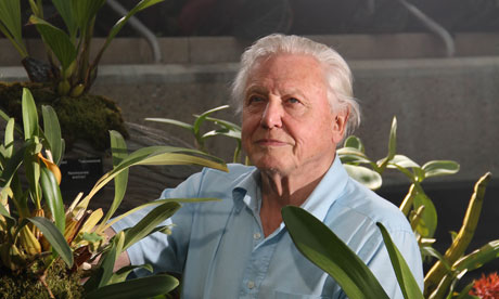 It's like a jungle in here … David Attenborough in Kingdom of Plants.