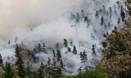 Fire burns through trees in Poudre Canyon in Colorado last week.