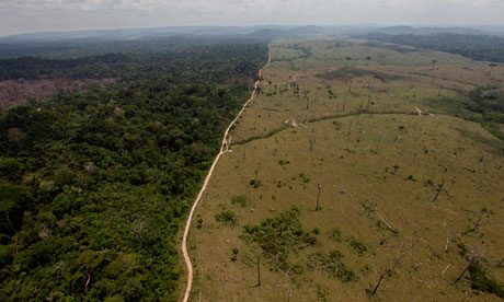 Deforestation: The Amazon Rainforest – Global Development and the ...