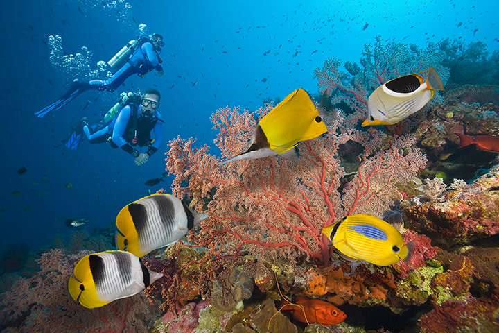 Places at risk: Two Scuba Divers on Great Barrier Reef