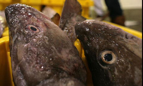 Cod waits to be bought at Grimsby fish docks