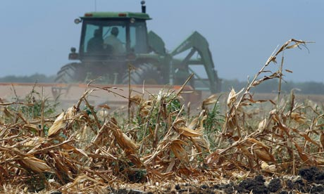 A tractor ploughs over a harvested cornfield in Texas