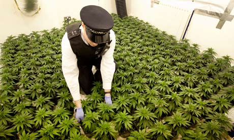 http://static.guim.co.uk/sys-images/Guardian/Pix/pictures/2012/7/26/1343306619063/cannabis-factory-in-a-hou-008.jpg