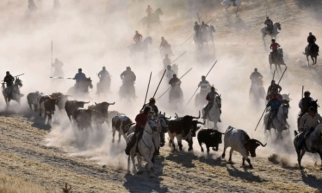 A group of horsemen lead the bulls of Hermanos Revesado Pernas-Torrealba ranch during the fifth and last bull run of Cuellar  which is considered to be the oldest running of the bulls of Spain  Photograph: Juan Martin Misis/EPA