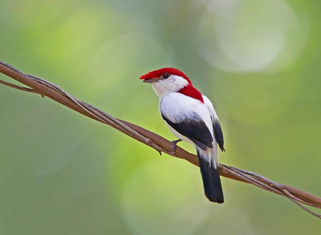 фото птиц россии занесенные в красную книгу