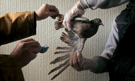 Pigeon fanciers in Edinburgh