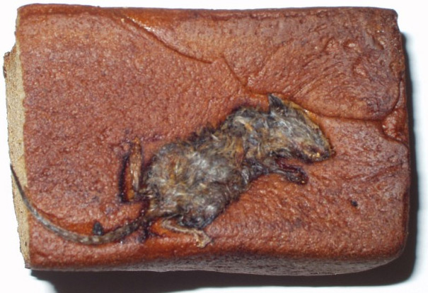 Foreign objects: A mouse in a Hyndman's malt loaf