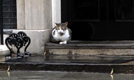 Also in Westminster, Larry the Downing Street cat stays out of the heavy rain on the steps of No 10