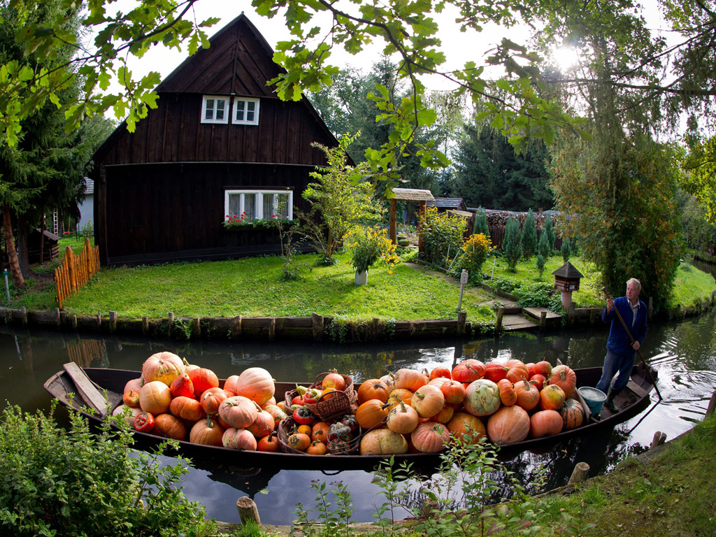 Pumpkin crop in the Spreewald, Germany