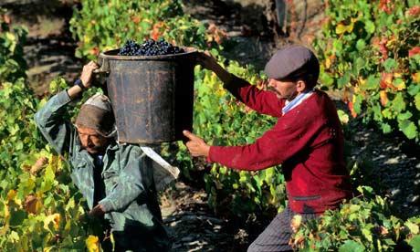 Grape pickers in Douro Valley, Portugal