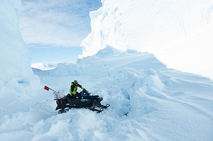 Penguins in Antarctica: fieldguide on skidoo.
