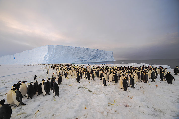 Penguins in Antarctica: 9,000-strong emperor penguin colony on Princess Ragnhild Coast