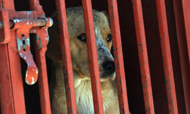 Unusual Suspect: An operation is underway to capture dogs at Cerro de la Estrella in Mexico City who will be DNA tested to find out if they participated in the deaths of four people. 35 animals have been rounded up so far in a country better known for its drug-related killings.