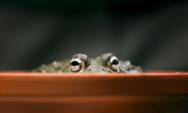 We can see you! An African bullfrog sits in a pot to be weighed during the annual inventory at the zoo in Dresden, Germany. See more images in our gallery of 24 hours in pictures.