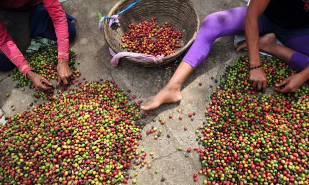 Your morning cup of coffee starts here. Women separate coffee beans in a farm near Managua, Nicaragua.
