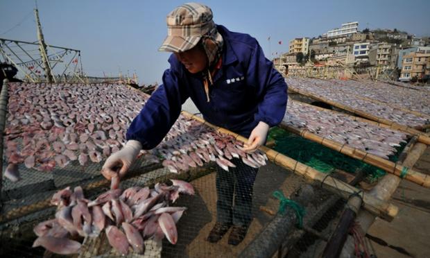 Fish row: fish dry in the sun on Jishan Island, in Yuhuan County, Taizhou, China