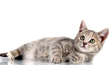 Perfect little kitten lying down