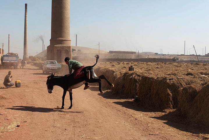 24 hours: Giza, Egypt: A child bricklayer rides on a donkey at a brick factory