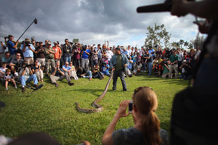 2013 Python Challenge : Hunting Excursions Latest In Effort To Curb Evasive Snake Population