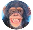 χιμπατζής του σώματος